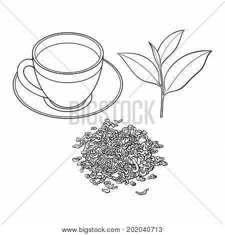 tea cup, fresh and dry leaves, sketch vector illustration isolated on white background. Hand drawn tea drink in transparent glass and china cup and saucer, fresh and dry leaves