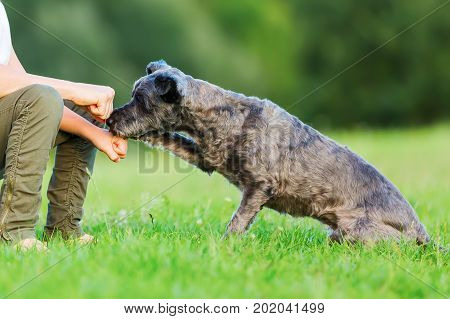 picture of a woman and young boy's hand which are holding a treat in the fist to a small dog