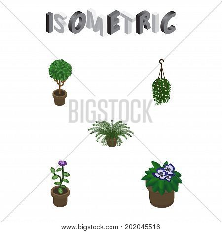 Isometric Houseplant Set Of Flowerpot, Plant, Tree And Other Vector Objects