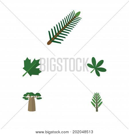Flat Icon Natural Set Of Spruce Leaves, Jungle, Maple And Other Vector Objects