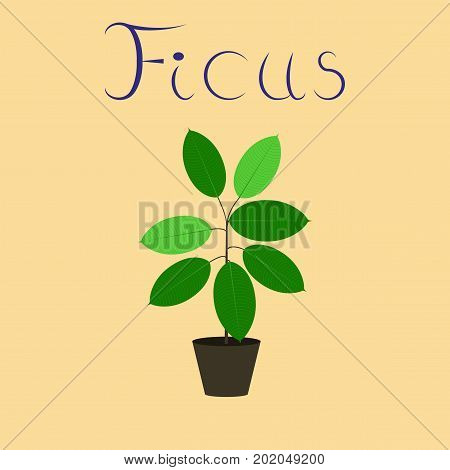flat illustration on stylish background plant Ficus