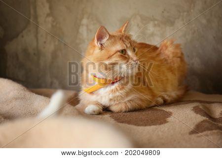 Cute homeless cat in animal shelter