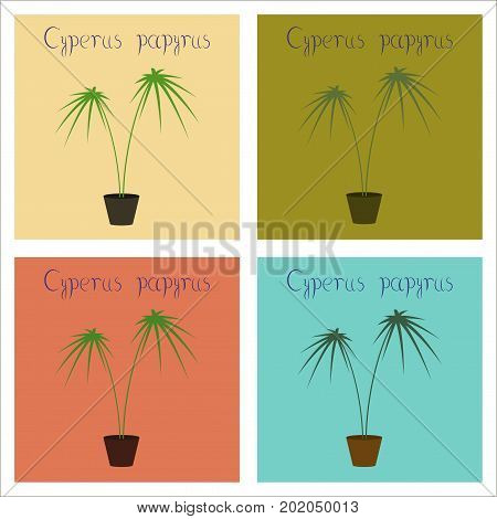 assembly of flat Illustrations nature plant Cyperus