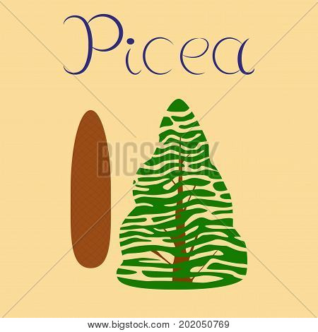 flat illustration on stylish background plant Picea