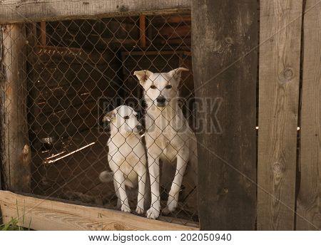 White homeless dogs in animal shelter