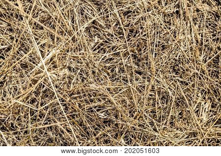 Close-up of long dry grass for background
