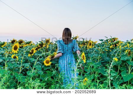 Back view of beautiful young blonde woman in blue dress on a field of sunflowers at sunset