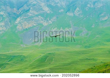 Scenic image of griffon vulture or Gyps fulvus flying in mountains