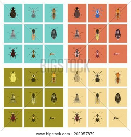 assembly of flat Illustrations insect honey wasp soldier bug ant mosquito scarab Araneus bee fly