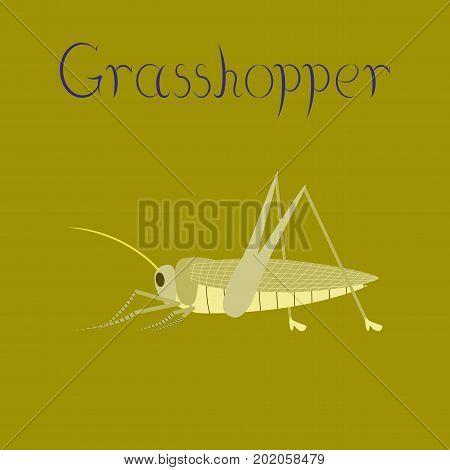 flat illustration on stylish background grasshopper wildlife