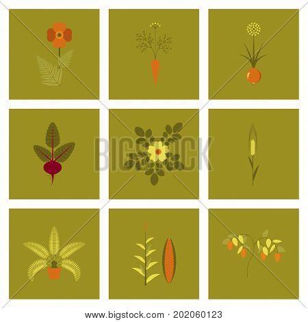 assembly of flat Illustrations papaver daucus carota allium beta rosa majalis phoenix zea mays pepper