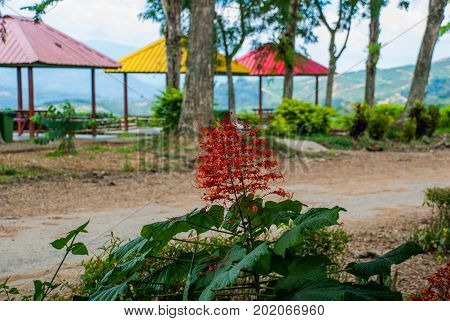 Landscape With Trees, Flowers And Gazebos. Sabah Tea. Borneo, Malaysia