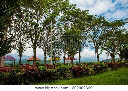 Landscape with trees and pavilions. Sabah tea. The mountains on the horizon. Borneo island, Malaysia