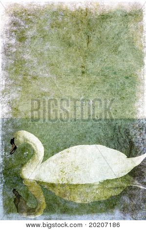 background texture featuring a white swan and plenty of space for text