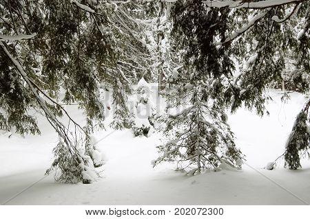 Snowdrifts in winter forest in Jasna ski resort in Demanovska valley Low Tatras Slovakia.