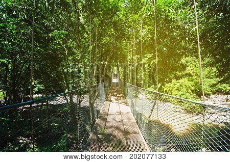 Suspension Bridge In The Jungle Of Borneo In Tabin, Lahad Datu, Sabah Borneo, Malaysia. Tabin Wildli