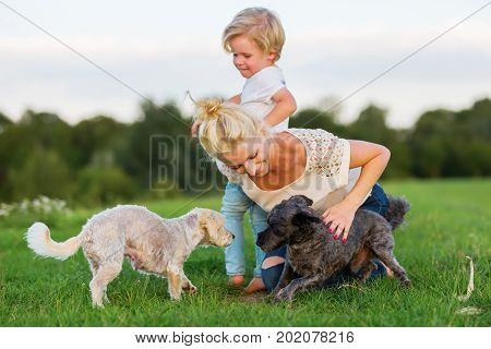 Woman Plays With Her Son And Two Small Dogs