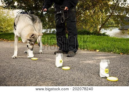 Identification of odor traces by police dog on outdoor location