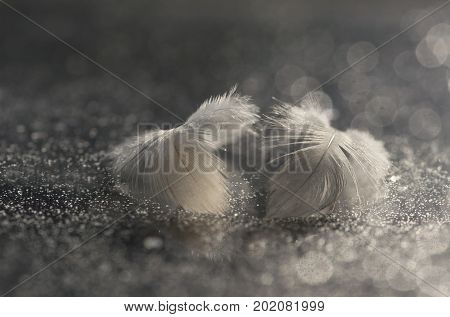 Two fluffy bird feathers on a silvery background with a bokeh