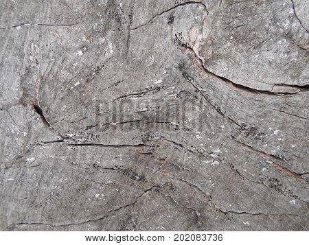 A cut of a tree close-up. Gray dry with cracks.