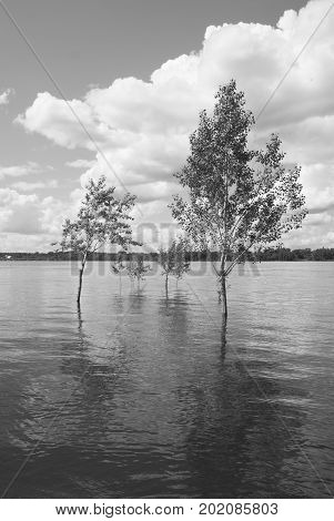 Several trees stand in the water during the spring flood of the river on a sunny day against a background of a water surface with a distant opposite shore and a sky with clouds