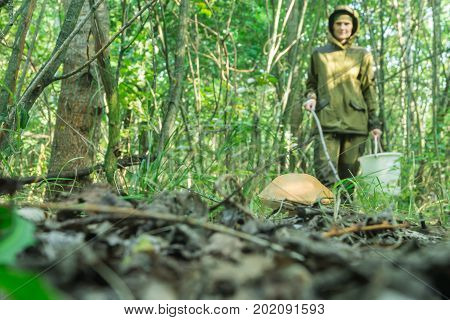 Young woman gathers mushrooms in the forest. Warm Sunny morning.