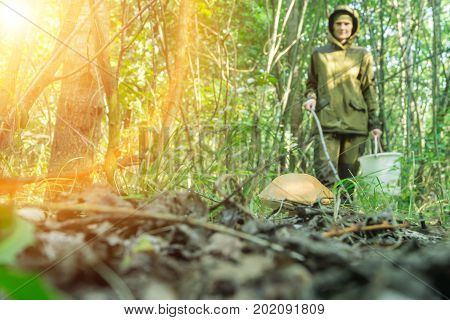 Young woman enjoying nature in sunny forest. collecting mushrooms