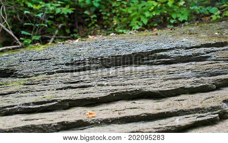 Layered solid stone rock in a forest. Selective focus.