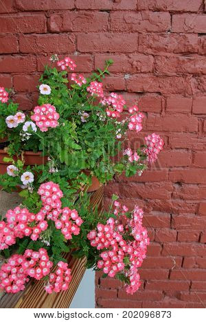 Vertical image of old brick wall and shelf with pretty potted plant that serves as a warm welcome to visitors.
