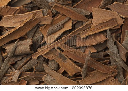 Pieces of cinnamon full frame