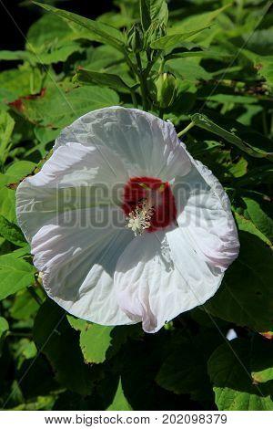 Vertical image of beautiful flower in backyard garden