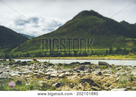 True tilt-shift shooting of pebble partly dried up coastline of Katun river with mountains in defocused foreground overgrown by native grasses Altai mountains in Kuyus district Russia