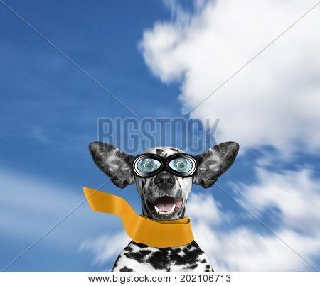 Dalmatian dog flying through the air with his ears like a superhero