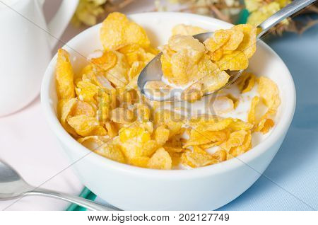 Corn flakes in a bowl with fresh milk for eating in the morning, breakfast or meal