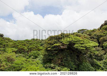 Lush trees rainforest canopy Monteverde Costa Rica