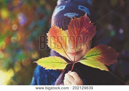 a little boy smiles and hides behind the autumn leaf. Concept of autumn, joy