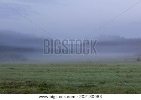 Foggy grassland at dawn landscape nature background