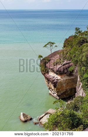 Cliff and trees at ocean shore landscape