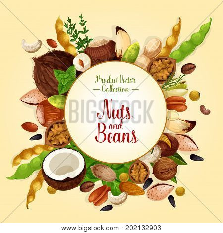 Nuts and beans poster of fruits kernels and seeds. Vector almond, pistachio or coconut and cashew nut, peanut or coffee beans, legume walnut or hazelnut and sunflower or pumpkin and pine nuts