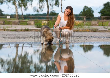Young Woman With An Elo Puppy At A Puddle