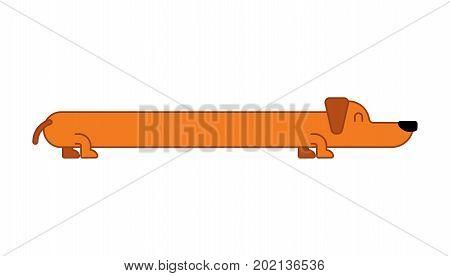 Long Dog Dachshund Isolated. Gaunt Home Pet
