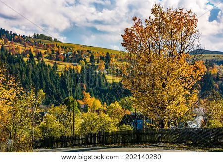 wooden fence and tree by the road in village. beautiful rural scenery in mountainous region. lovely afternoon autumn weather