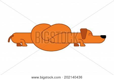 Dachshund Knot Long Dog Isolated. Gaunt Home Pet