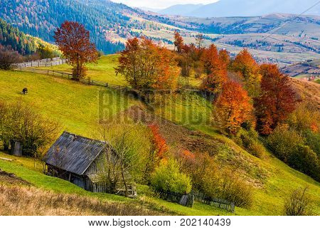 Woodshed On Grassy Hillside With Reddish Trees