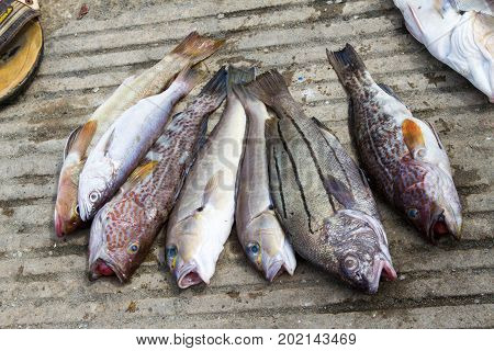 Fish From The Day's Catch