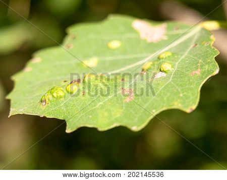 Close Up Leaf Petal With Bumps Summer