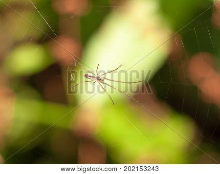 Common Uk Spider On Web Outside Summer