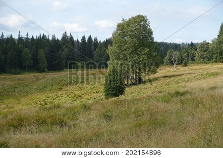 Sumava's nature, spell can fascinate everyone. She is very compelling