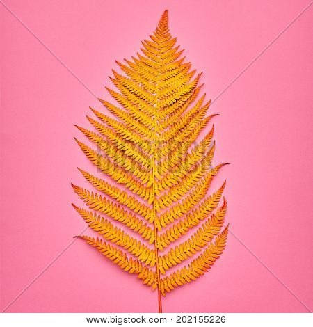 Autumn Arrives. Fall Leaves Background. Fall Fashion Design. Art Gallery. Minimal. Yellow Fern Leaf on Pink. Autumn fashion Vintage Concept