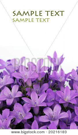 lovely purple flowers against white background